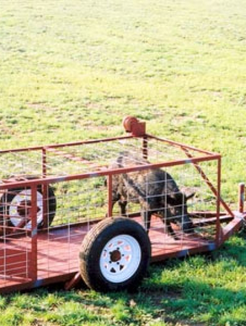 Deluxe Wild Hog Trap on Wheels