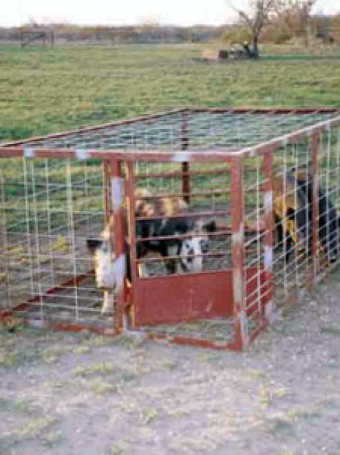 Basic Hog Trap